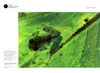 Luis Louro - Fotografia - National Geographic No80 2007 - Artigo