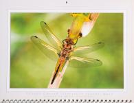 Luis Louro Photography - Flickr.com - Dragonflies and Damselflies Calendar 2010
